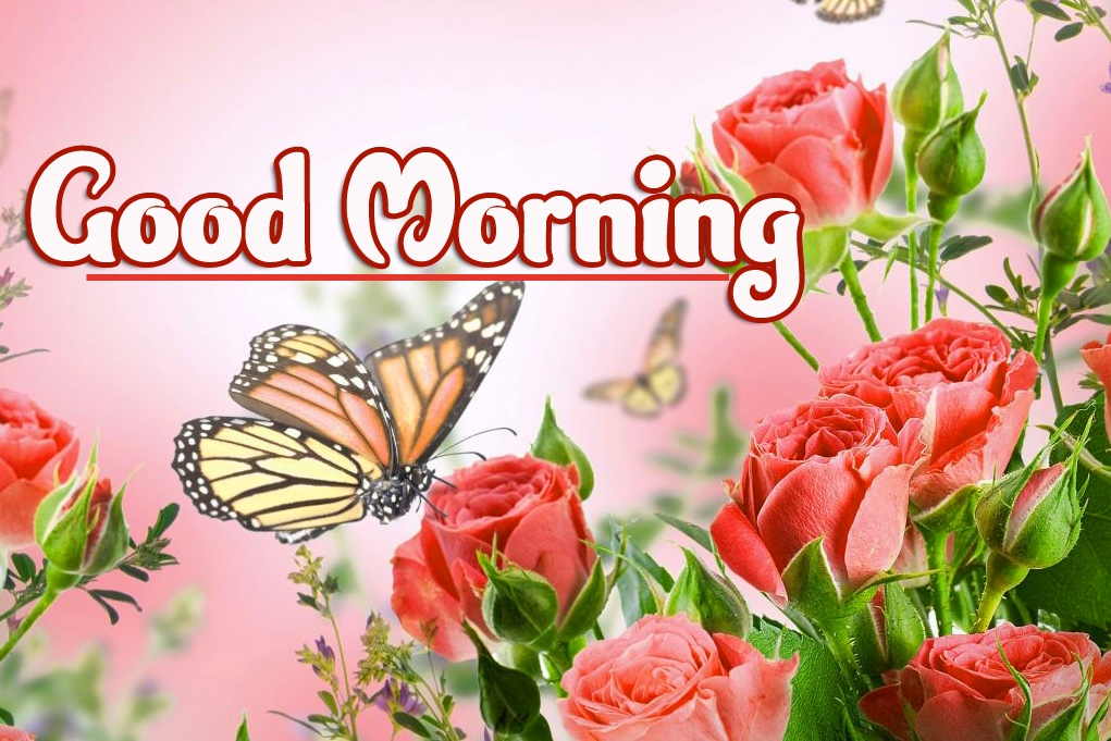 Good Morning Wallpaper Photo New Download
