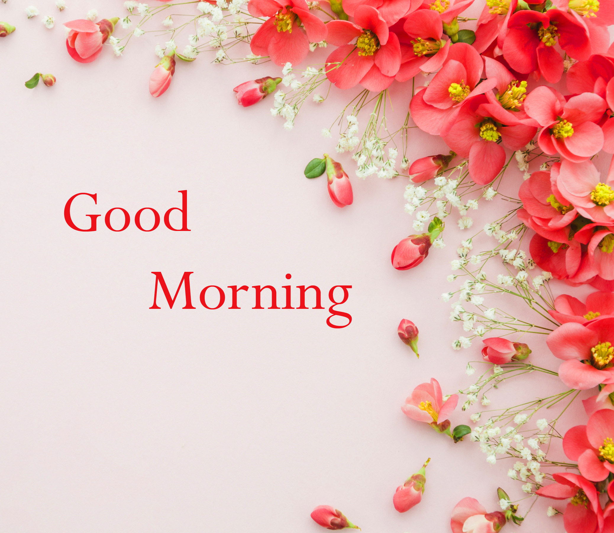 Free New Good Morning Wallpaper Pics Free Download