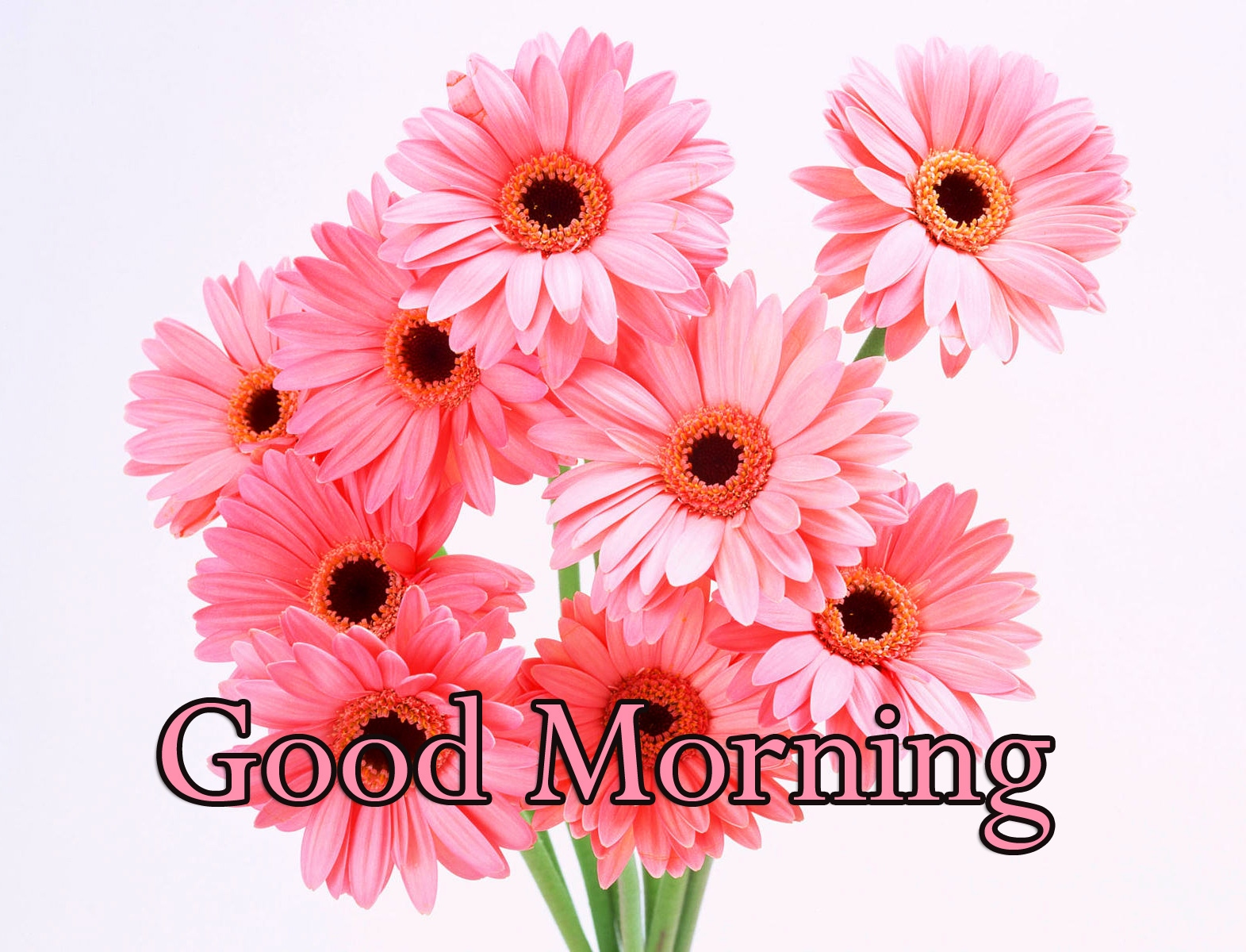 Good Morning Wallpaper Pics Free New Download
