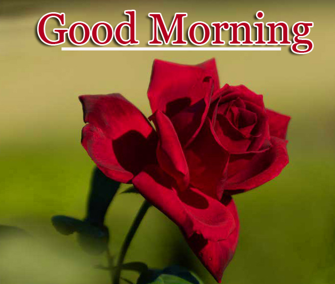 New Best Good Morning Wallpaper Pics Download