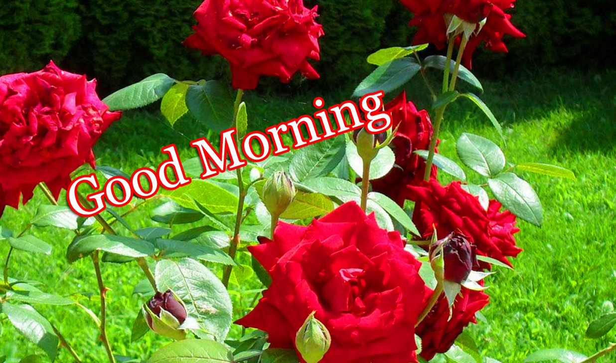 Beautiful Free Good Morning Wallpaper Pics Download free