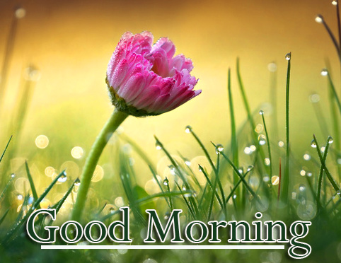 Good Morning Wallpaper Photo Free Download