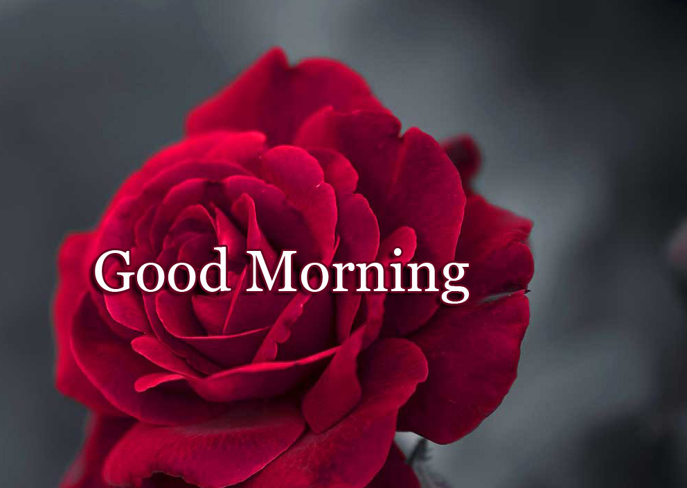 New Free Good Morning Wallpaper Pics Download