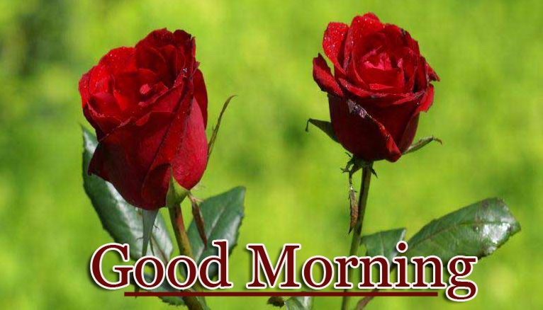 Sweet Rose Good Morning Wallpaper Pics Download