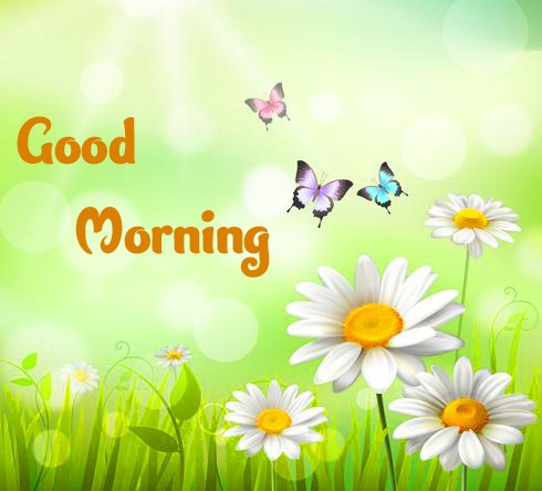 Best Quality Free Good Morning Wallpaper Pics Download