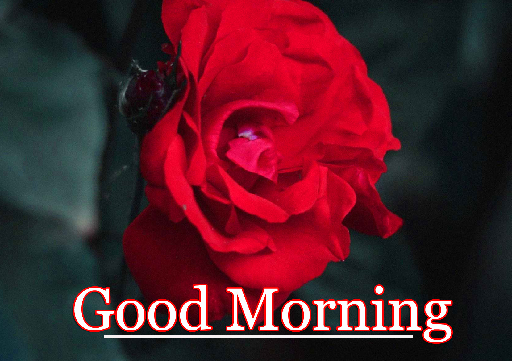 Free Good Morning Wallpaper Pics Latest Download