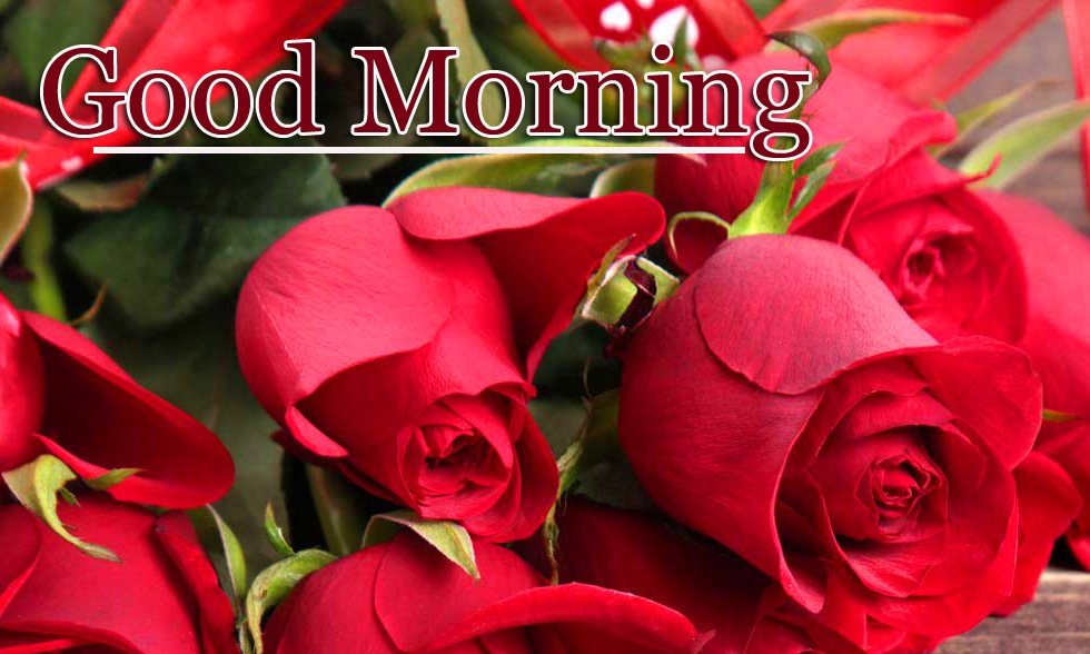 Top Free Latest Good Morning Wallpaper Pics Download