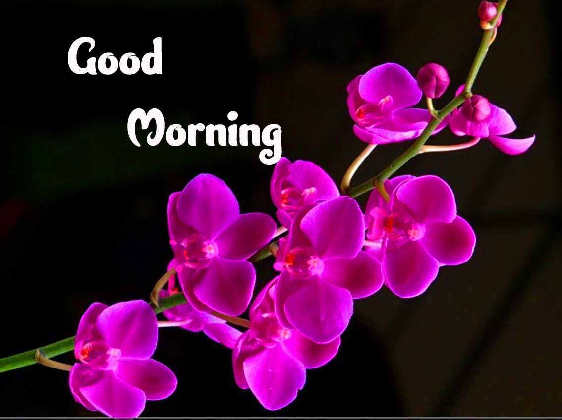Good Morning Wallpaper Photo Download