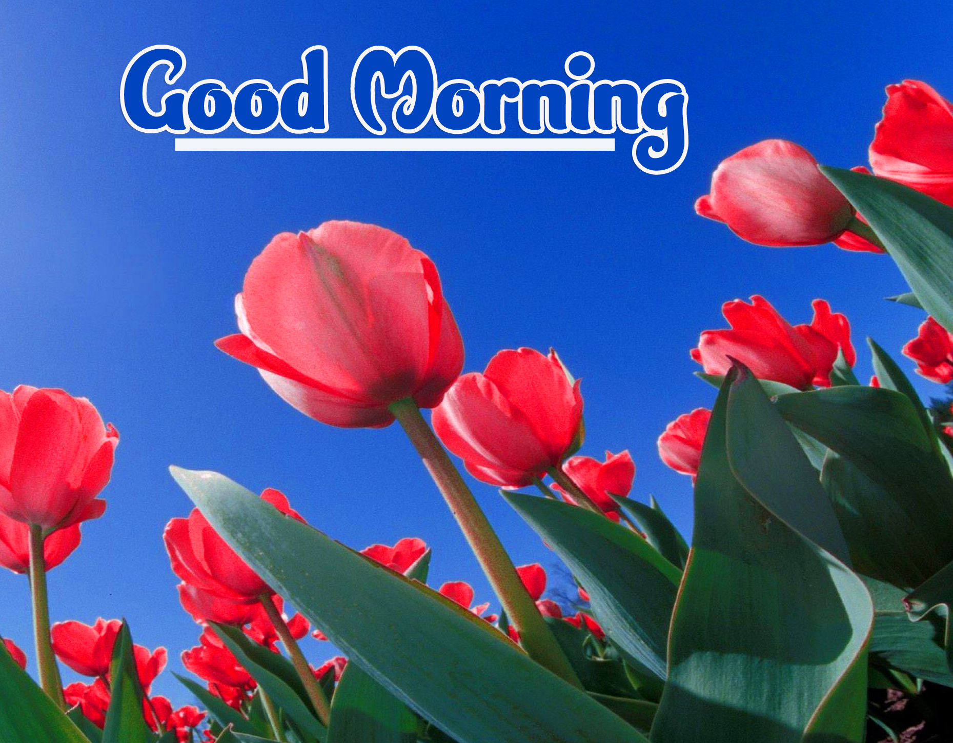Good Morning Wallpaper Pics Download