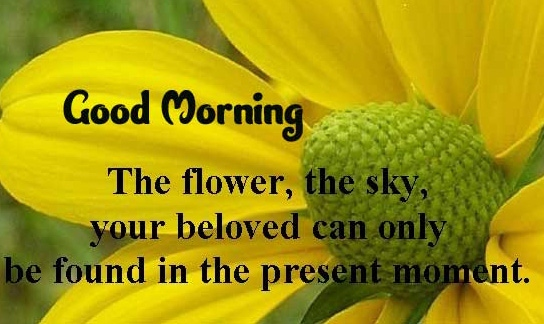 Top Free Good Morning Wishes Images with positive thoughts Images Download