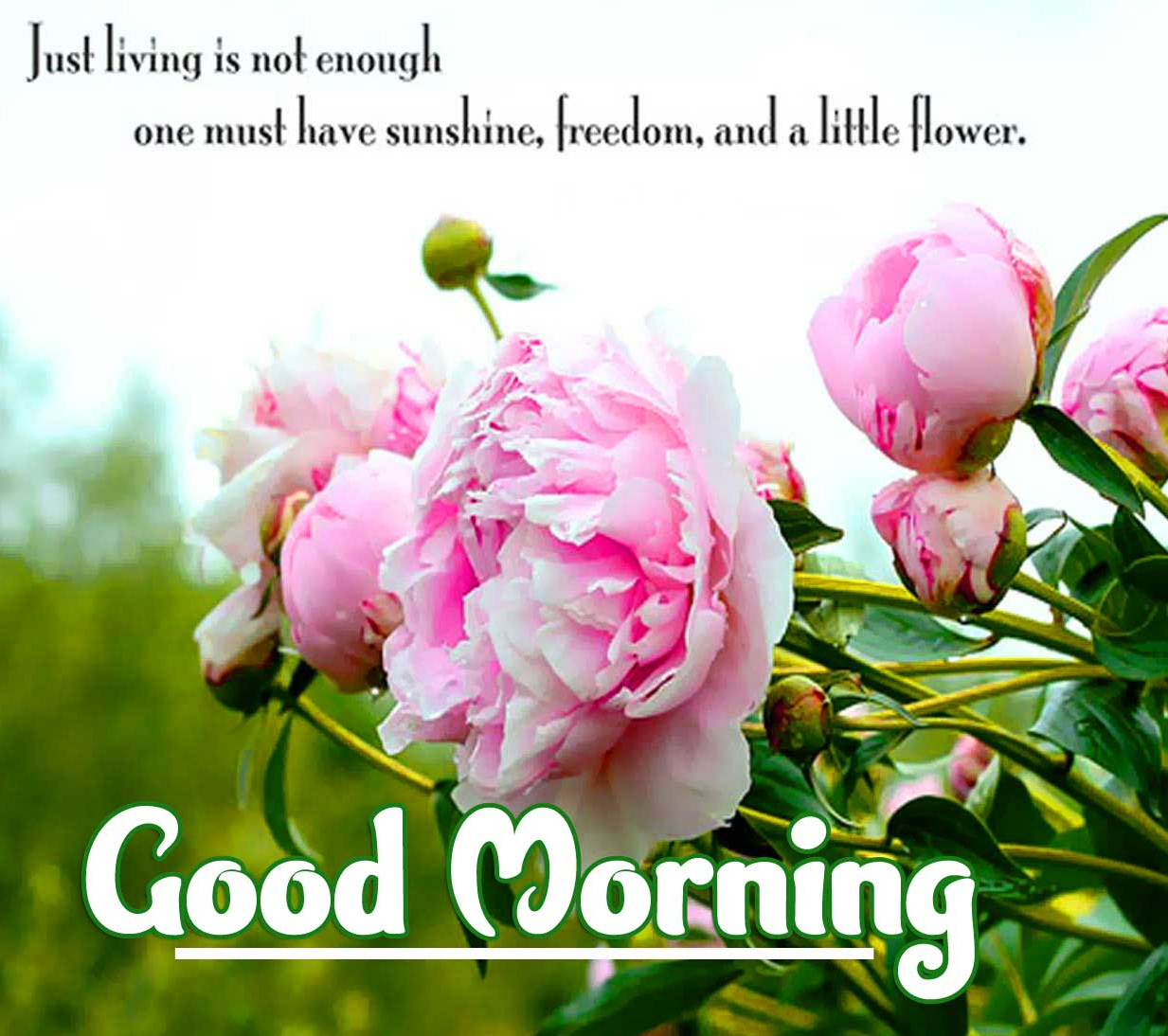 positive thoughts good Morning Wallpaper free