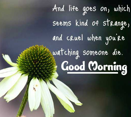positive thoughts good Morning photo free Download
