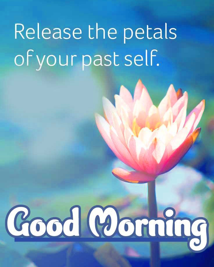 Latest Sweet Flower Good Morning Wishes Images with positive thoughts Images Download