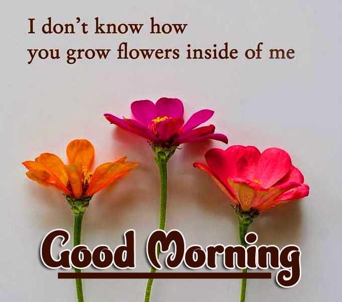 Good Morning Pics free Download Free