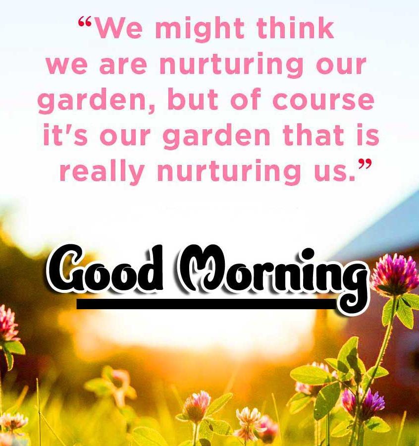 Good Morning Wallpaper Free Download Free