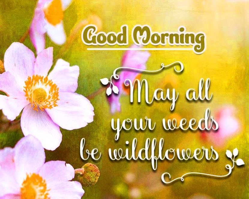Good Morning Pics Wallpaper Free Download