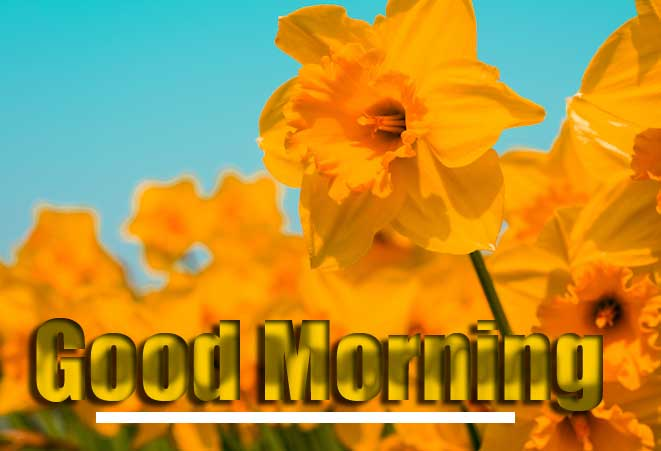 Good Morning Wishes With Sunrise Wallpaper Latest Download