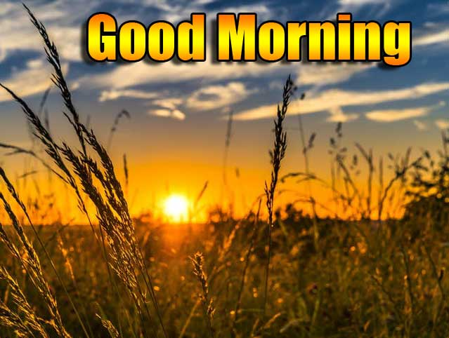 Beautiful Free Good Morning Wishes With Sunrise Wallpaper Pics Free Download