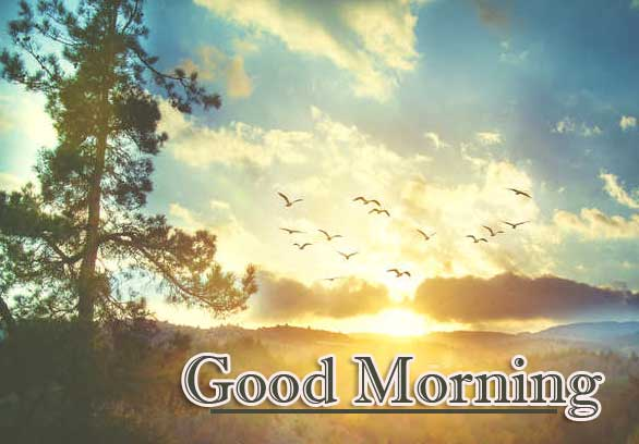 Beautiful Free Good Morning Wishes With Sunrise Wallpaper for Facebook