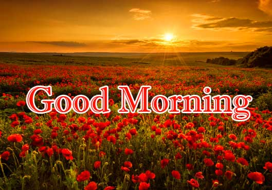 Beautiful Free Good Morning Wishes With Sunrise Wallpaper new Download