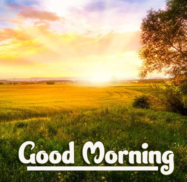 Best Free Beautiful Free Good Morning Wishes With Sunrise Wallpaper Download Free