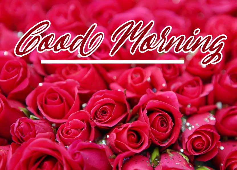 Top Latest Beautiful Red Rose Good Morning Photos Pics Download