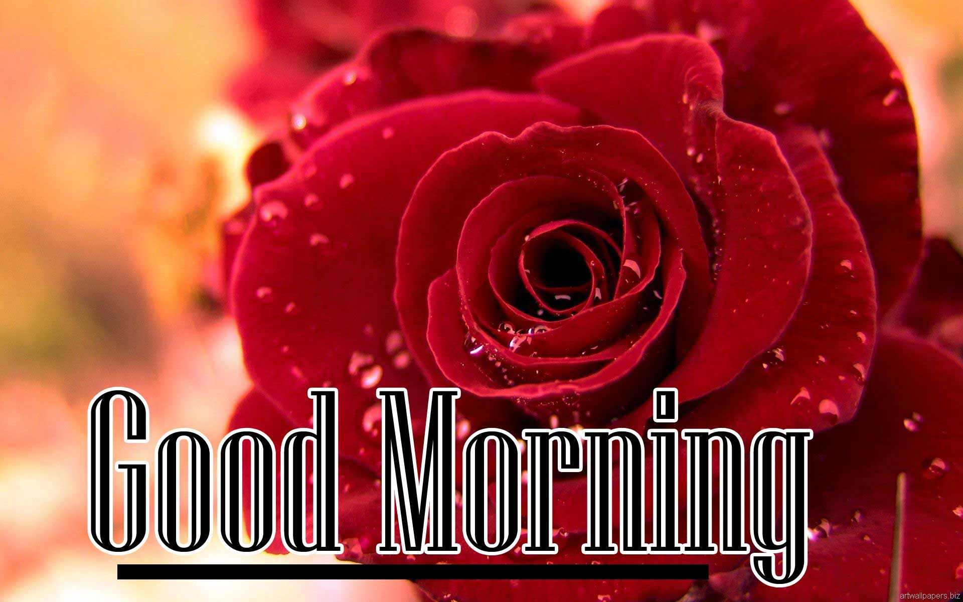 New Top Free Beautiful Red Rose Good Morning Photos Pics Download