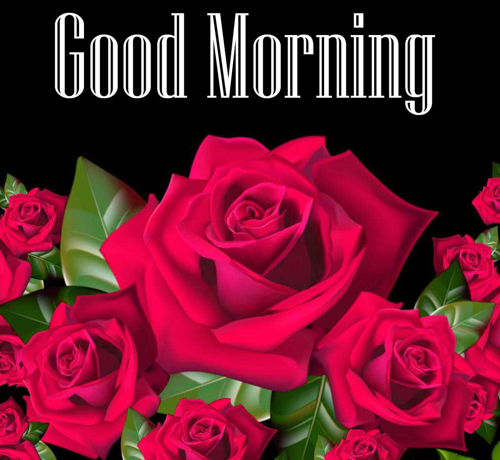 Beautiful Red Rose Good Morning Photos Pics Free With Red Rose