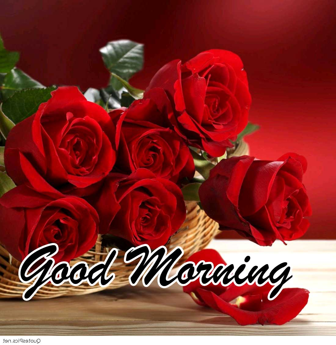 Beautiful Red Rose Good Morning Pics Download & Share