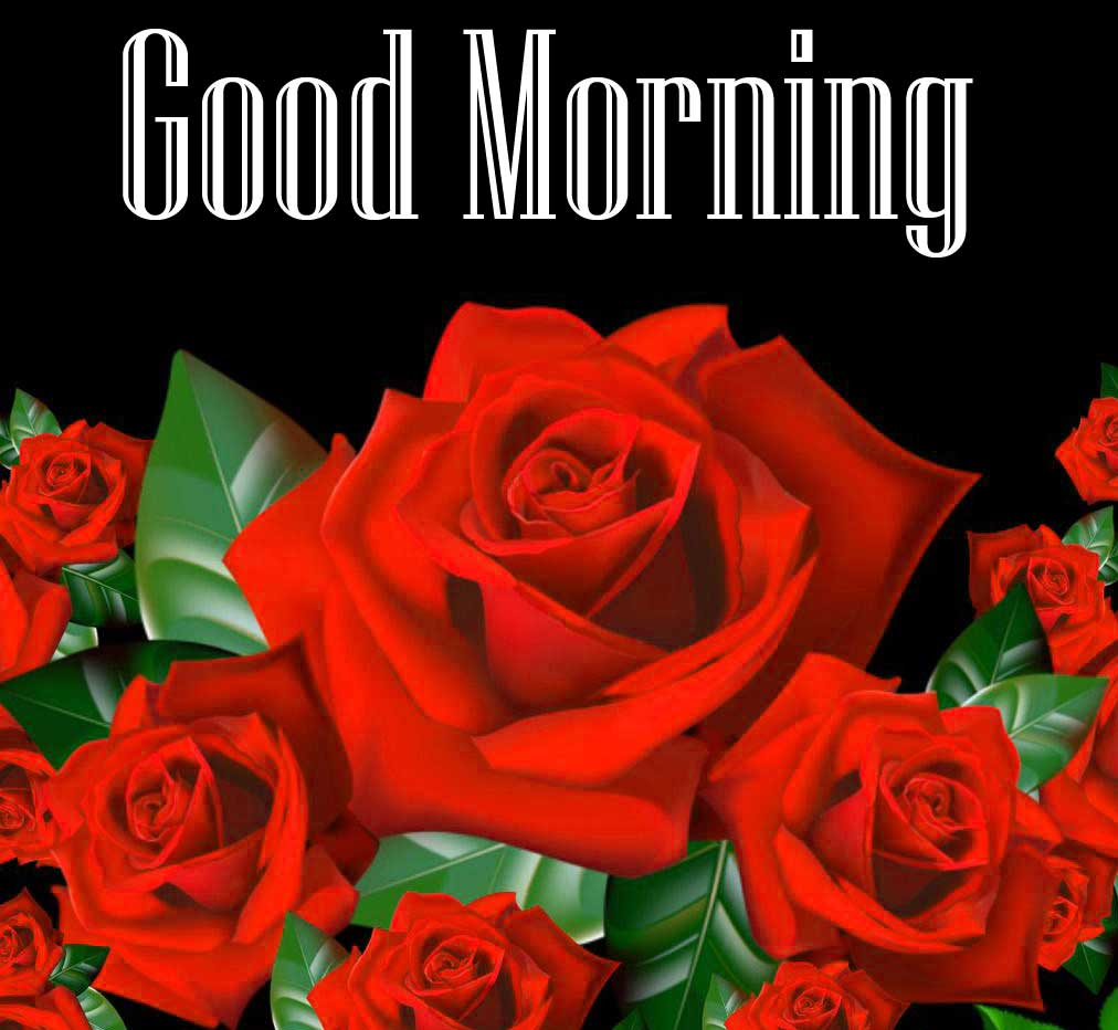 New Latest Free Beautiful Red Rose Good Morning Pics Download