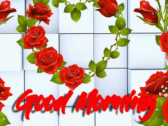 Beautiful for Girlfriend Red Rose Good Morning Pics Images Download