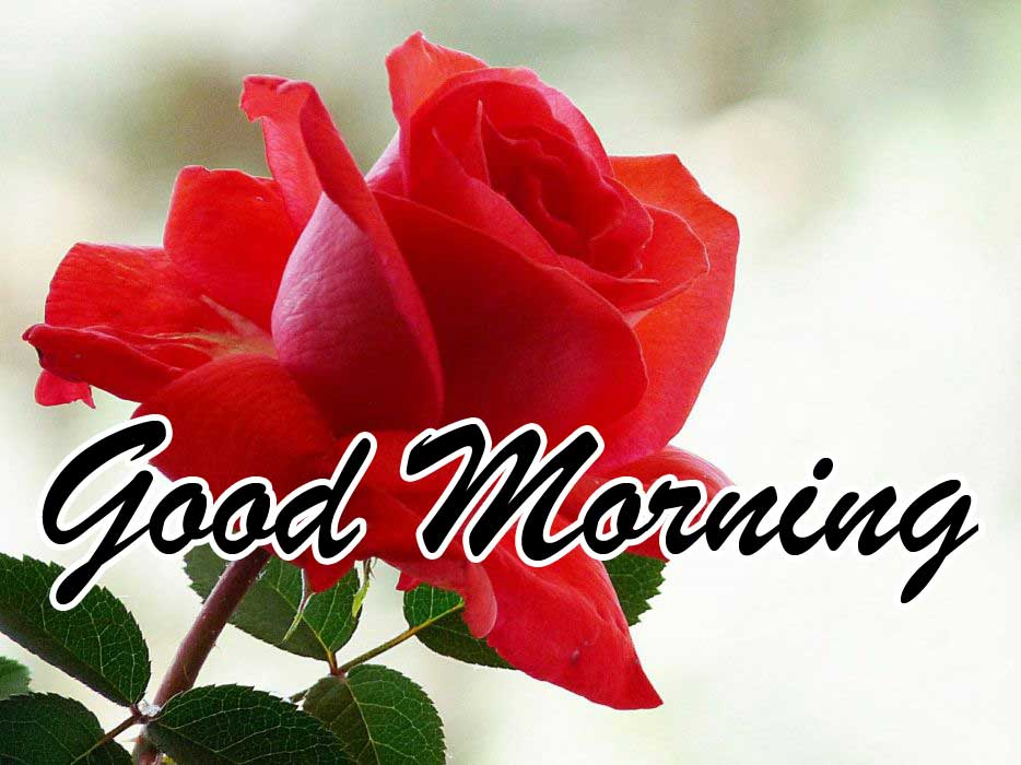 Beautiful for Girlfriend Red Rose Good Morning Pictures Free for facebook