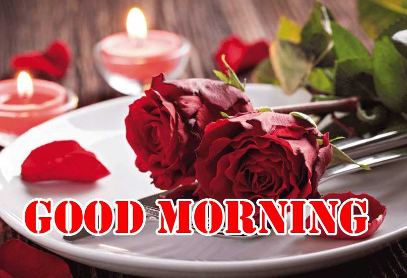 Top Free Beautiful for Girlfriend Red Rose Good Morning Pics Images Download