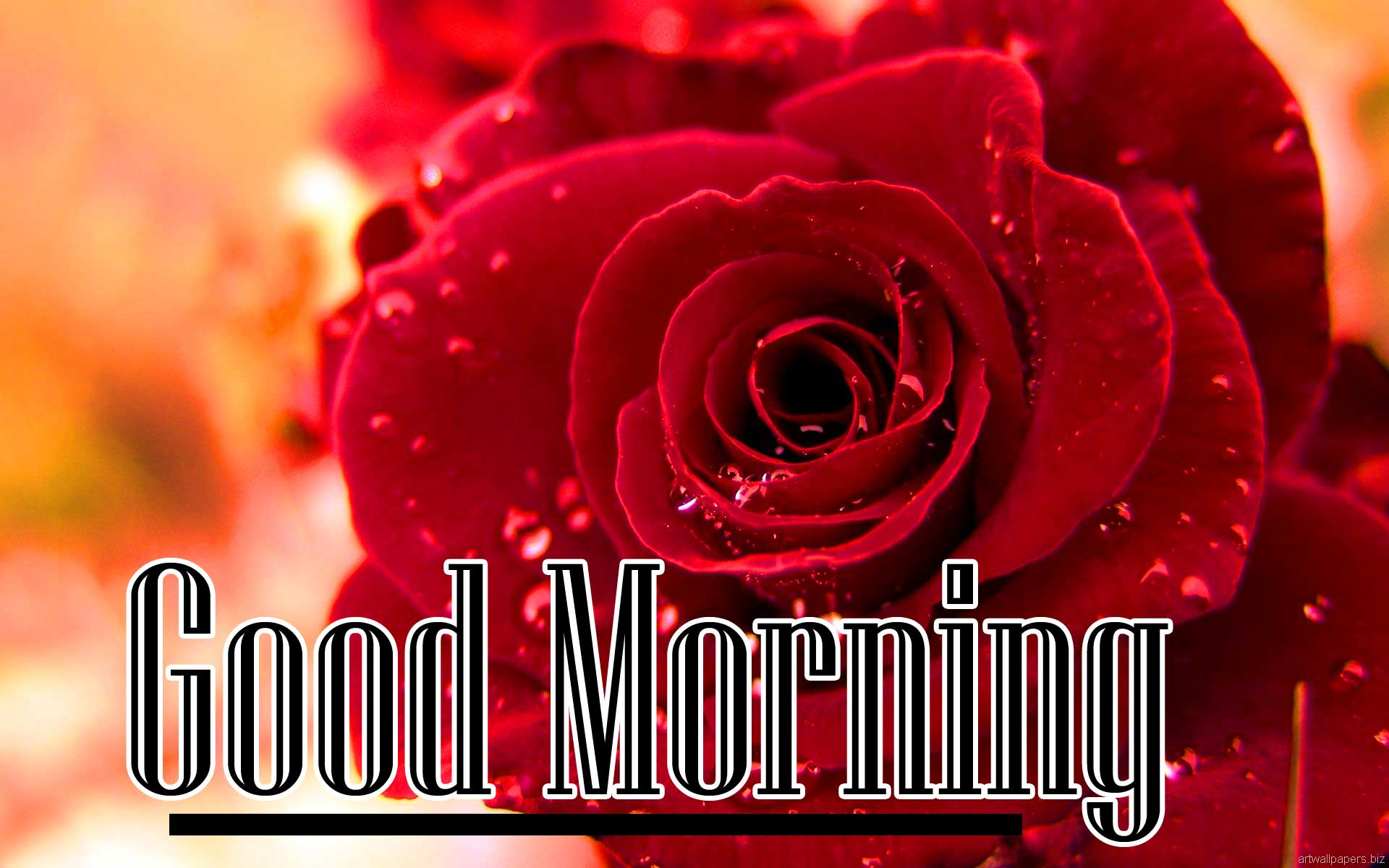 Beautiful for Girlfriend Red Rose Good Morning Pics Free Download