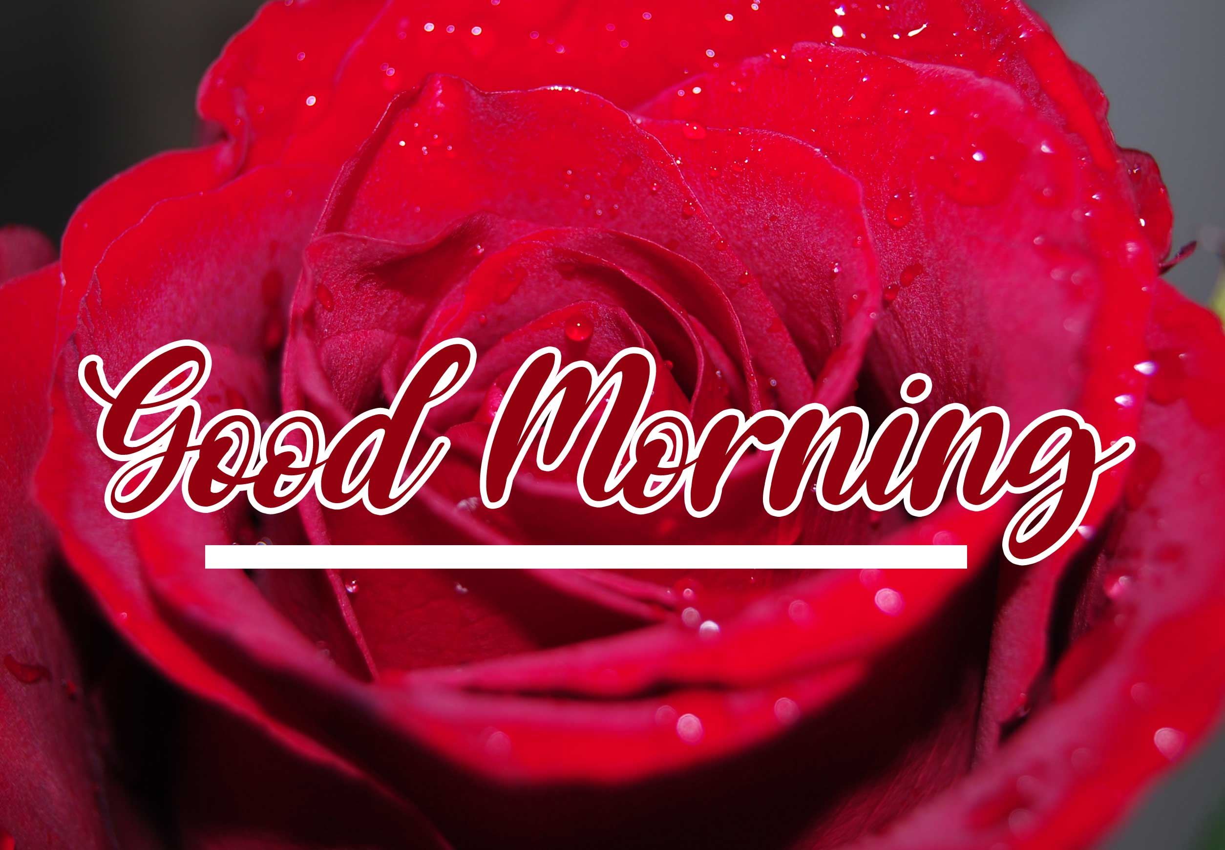 Beautiful for Girlfriend Red Rose Good Morning Pics Photo for Facebook