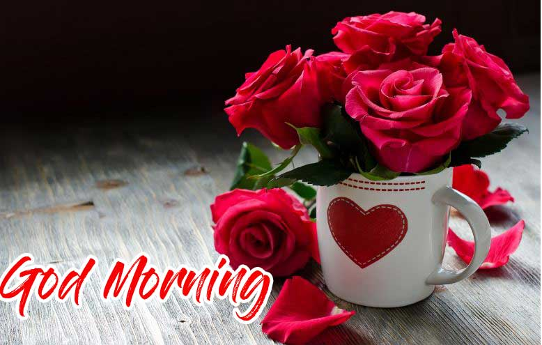 Beautiful for Girlfriend Red Rose Good Morning Pics Download Latest