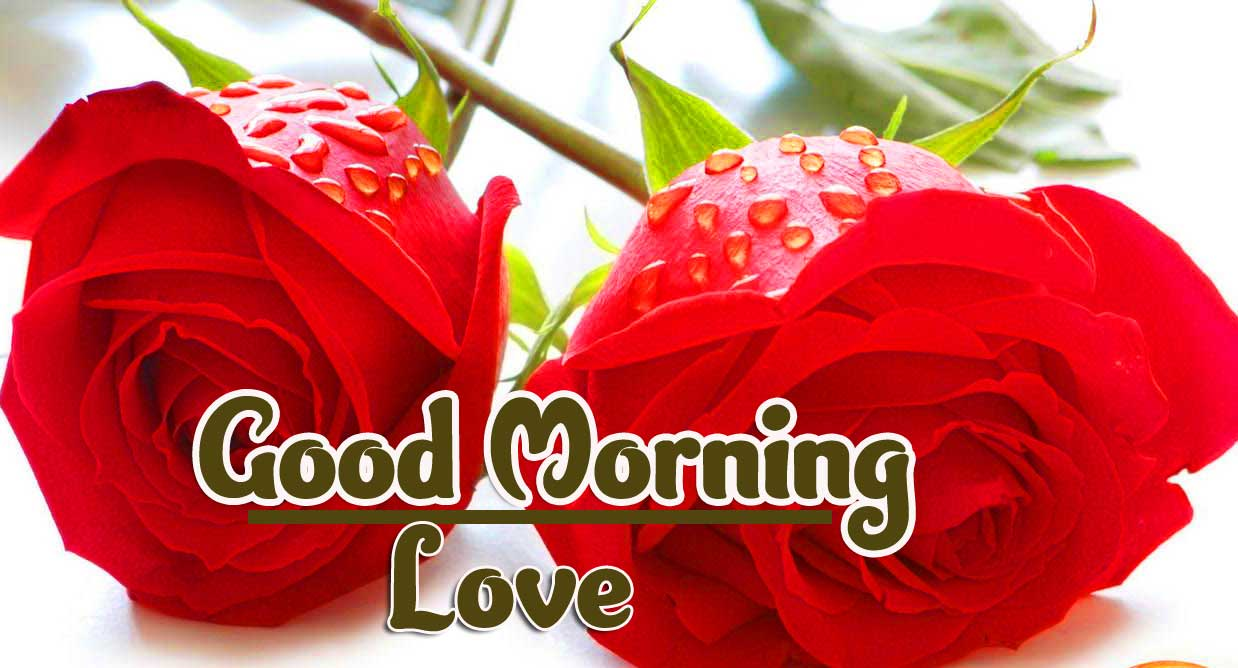 New Free Beautiful Red Rose Good Morning Photos Pics Download