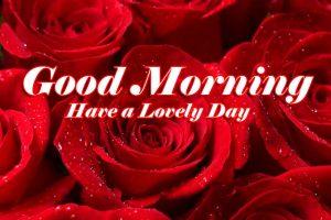 Red Rose Good Morning Photos 83