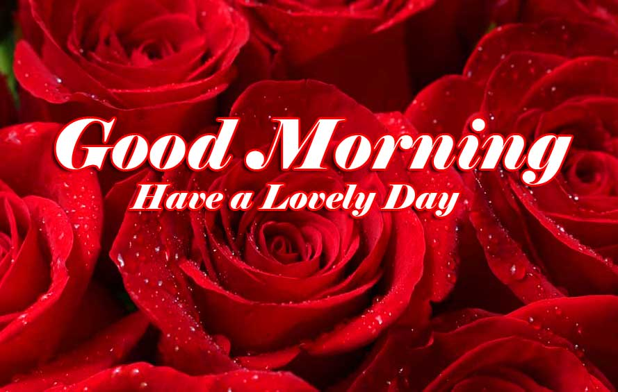 Full HD Free Beautiful for Girlfriend Red Rose Good Morning Pics Images Download
