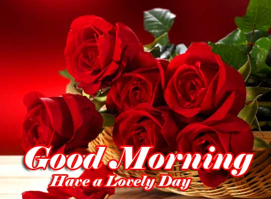 Beautiful for Girlfriend Red Rose Good Morning Wallpaper for Facebook