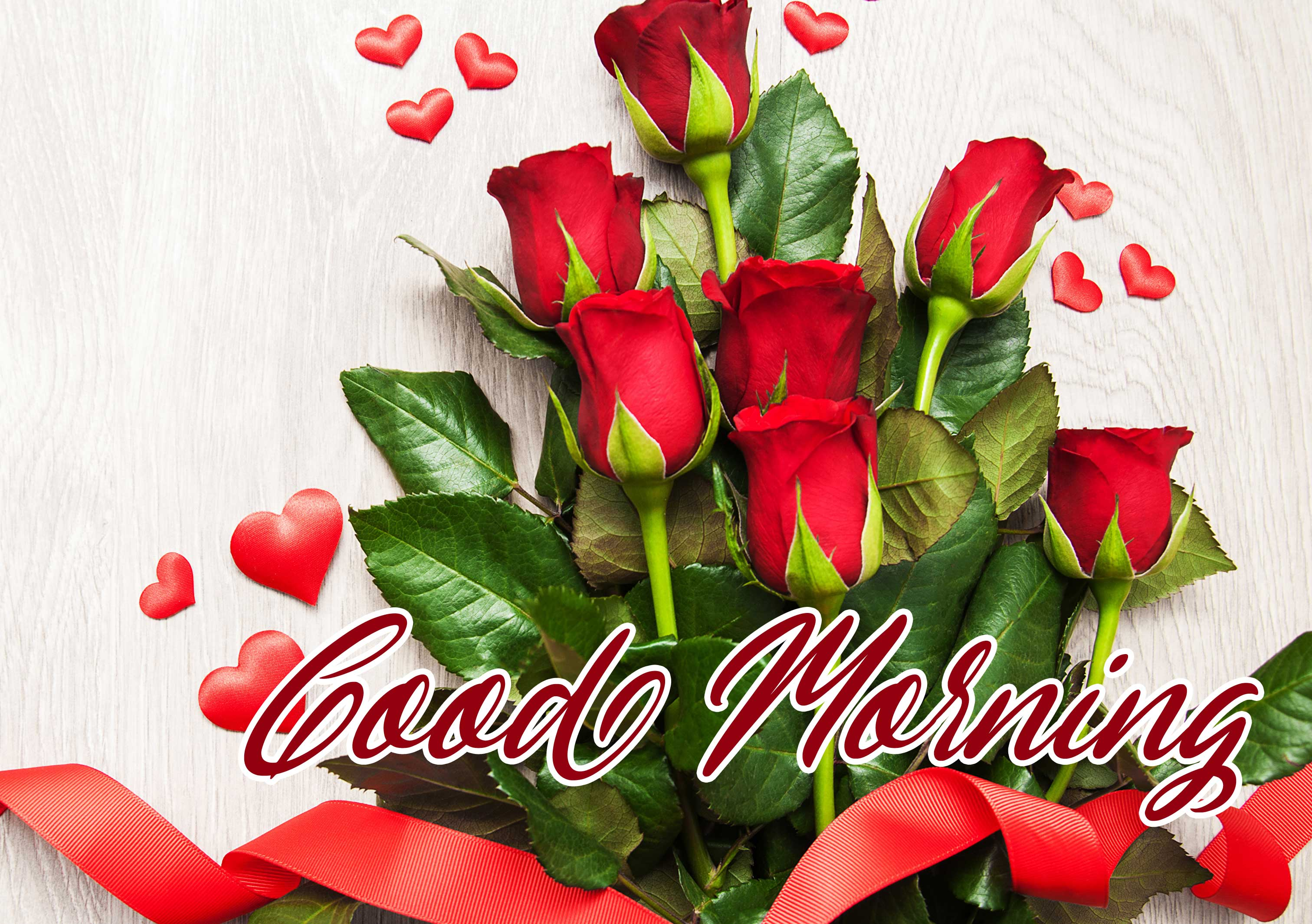 Sweet Beautiful for Girlfriend Red Rose Good Morning Pics Download
