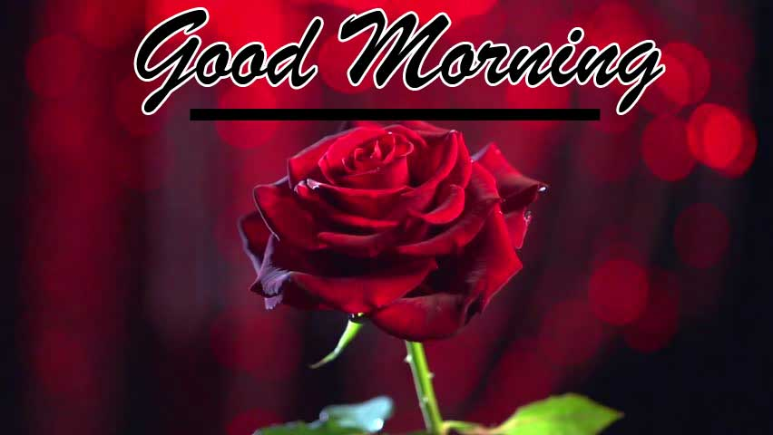 Beautiful for Girlfriend Red Rose Good Morning Photo Download Free