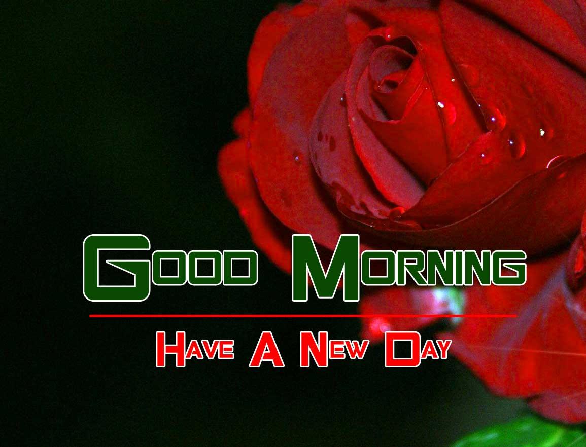 Rose Free Good Morning Images
