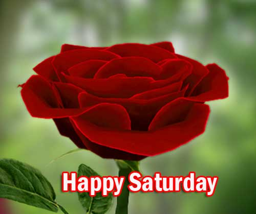 Beautiful Happy Saturday Good Morning Pics Wallpaper Download
