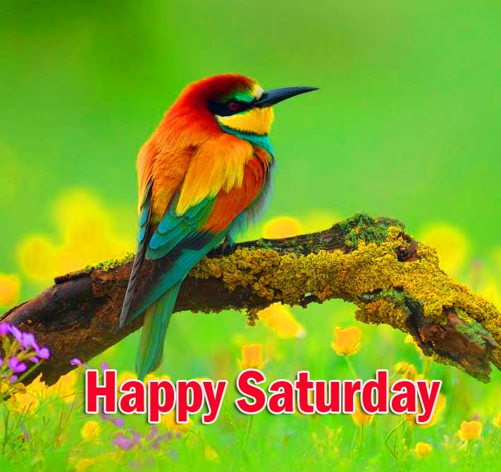 Happy Saturday Good Morning Images Free for Facebook