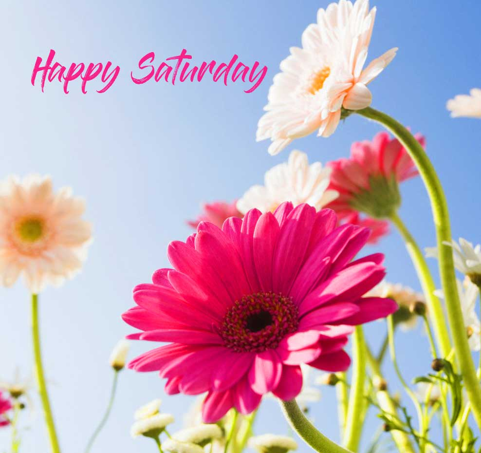 Happy Saturday Good Morning Wallpaper Pics Download Free