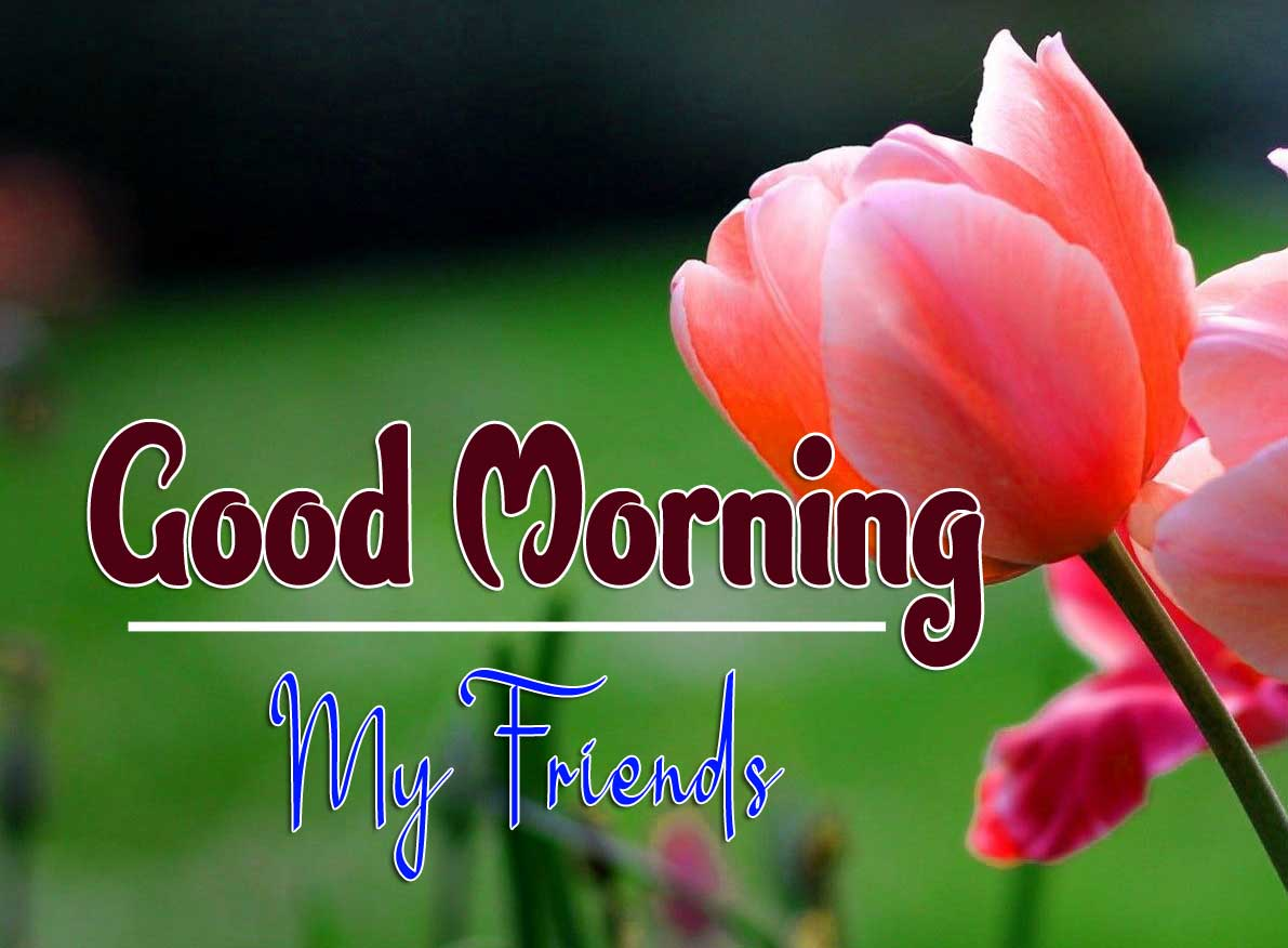Top Quality Free Good Morning Pic s Download