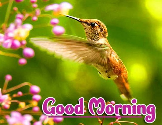 Beautiful 2021 Good Morning Images Wallpaper New Download