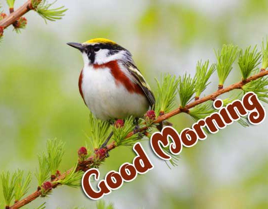 2021 Good Morning Images Pics Download New