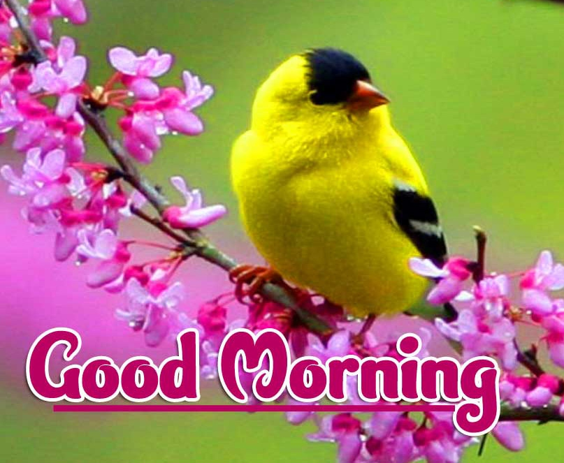 2021 Good Morning Images Wallpaper Latest Download